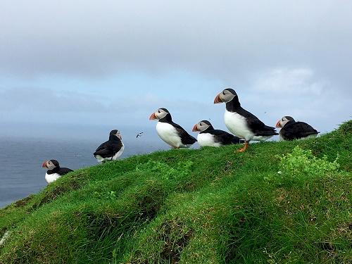 1. Mykines adasını ve şirin Puffin kuşlarını ziyaret edin.